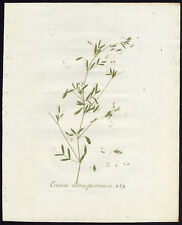 Antique Print-SMOOTH TARE-LENTIL VETCH-VICIA-269-Flora Batava-Sepp-1800