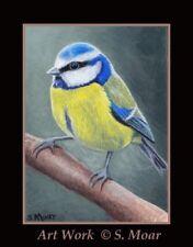Pretty Blue Tit Bird Wildlife ACEO Limited Edition Miniature Art Print