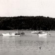 Vintage 1954 Rppc Cutler Sailboats Boats Postcard Maine
