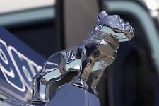 Mack Trucks Original Genuine Large Polished Chrome OEM Bulldog Hood Ornament-NIB