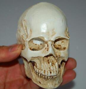 Mini Handmade Human Resin Skull Medical Model Bar Decor Replica Cranium White