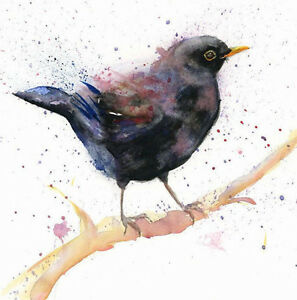 Limited Print of BLACKBIRD original watercolour by HELEN APRIL ROSE   315