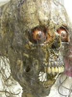 "HALLOWEEN HORROR MOVIE PROP - Realistic Human Corpse Head ""Krazy Kitty"""
