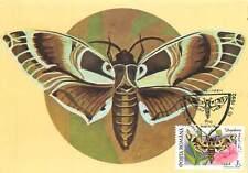 Daphnis nerii butterfly Postcard