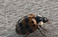 a picture of a lady bug.