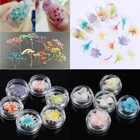 New 3D Mixed Dried Flowers Nail Art Glass Bottle Decoration Flower Manicure DIY