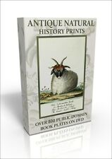 Antique Natural History Prints - 500 public domain images DVD Catesby, Sowerby