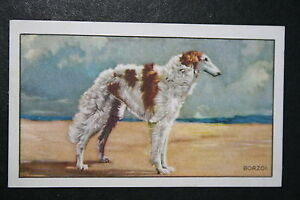 BORZOI  RUSSIAN WOLFHOUND  Original 1930's Vintage Illustrated Card  VGC