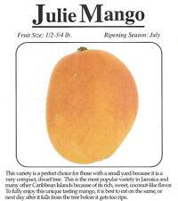 Julie Grafted Dwarf Mango Tree 7 Gal Potted Tree