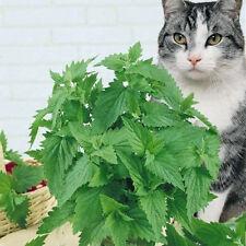 400pcs Catnip hierba para gato Nepeta Cataria orgánico hierba plantas semillas