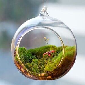 Terrarium Ball Globe Shape Clear Hanging Glass Vase Flower Plants Terrarium Land
