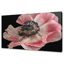 Anemone Flower Canvas Print Picture Wall Art Home Decor Free Fast Delivery