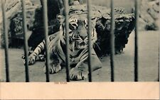 "Postcard Raphael Tuck ""The Tiger"" Zoo Series 524 C.1905 A16"
