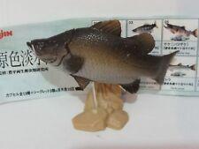 Yujin 原色淡水魚圖鑑 I No.13 Lates calcarifer
