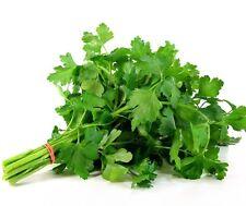Plain Parsley Petroselinum crispum 1000 seeds * herb * spice * CombSH G34
