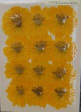 Cosmos Yellow Real Pressed Flower Craft Embellishments