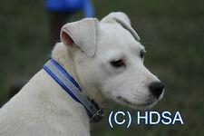 "Dog Collar - 3/4""  Reflective - Terrier, Whippet, Puppy, Pet, Hi Vis Neon Blue"