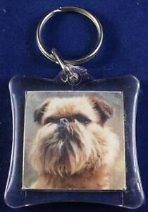 Griffron Bruexllois toy breed pedigree dog man's best friend  brand new