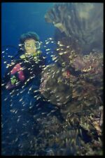 156050 Scuba Diver With School Of Small Glassy Sweeper Fish A4 Photo Print