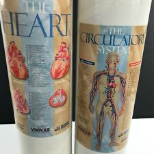 Heart & Circulatory System Medical Anatomy Biology Educational Teaching POSTERS