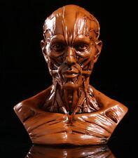 10cm Human Model Anatomy Skull Head Muscle Bone Medical Artist Drawing School