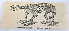 1832 magazine engraving ~ The Great Skeleton Of The Megatherium