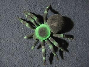 Rubber Black and Green Tarantula Spider