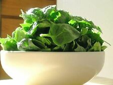 1500 Bloomsdale Spinach Spinacia Oleracea Seeds + Gift