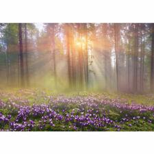 Fototapete Wald Bäume Natur Baum grün Sonne liwwing no. 239