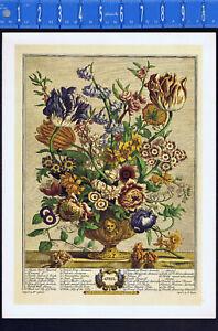 APRIL FLOWERS by Pieter Casteels -1937 Color Botanical Print