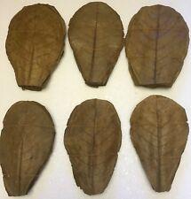 Ca. 150gr 100 Stück beste Seemandelbaumblätter BLITZVERSAND reines Naturprodukt