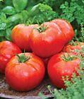 SUPER SIZED 5 Lbs BEEFSTEAK TOMATO SEED'S Organic 10 Seeds 2020 Fresh