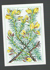 Playing  Cards 1  ANTIQUE  SQ  CORNER GOURSE FLOWERS & BUSH   SQ33  C1800'S