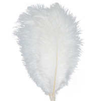 White Natural Ostrich Feathers 12-14 Inch Home Wedding Party Decor DIY Wholesale