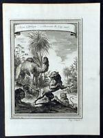1755 Prevost & Schley Original Antique Print of Lion, Lioness & African Camel