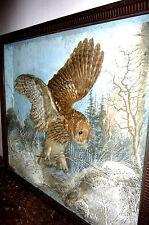 Eule Uhu Raubvogel Tier Prätaration Tierprätarat Jagt Schaukasten Wild Vogel