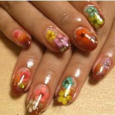 Women Fashion Manicure Nail Art Case Dried Small Flowers 12 Colors DIY Decor