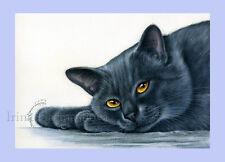 British Blue Cat Stampa poggiare su Morbido Paws By Irina garmashova
