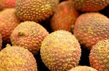 Photo.  Close-up of Lychee Nuts