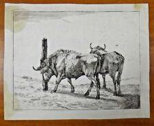 """Vintage Etching Karel DuJardin 1626-1678 """"Zwei Stiere"""" Art 7x9"""