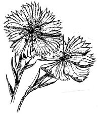 Unmounted Rubber Stamp, Floral Stamps, Nature, Flowers, Flower Stamps, Dianthus