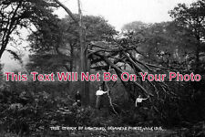 CH 408 - Tree Struck By Lightning, Delamere Forest, Frodsham, Cheshire c1915
