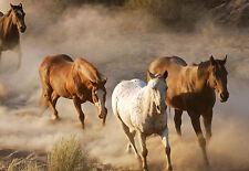 Incorniciato stampa-WILD HORSES in esecuzione nella sabbia (foto poster arte animali allevamento)