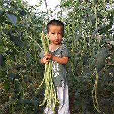 European Long Bean Seed Carob Rare Vegetable Bonsai Annual Plant 10 Pcs/ package