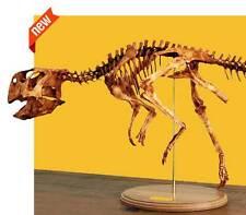 PSITTACOSAURUS • replica PSITTACOSAUR skeleton • LIFE SIZE dinosaur fossil DIY