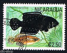 FLORA E FAUNA 1 FRANCOBOLLO PESCI NICARAGUA CYNOBELIAS NIGRIPINNIS 1981 timbrato