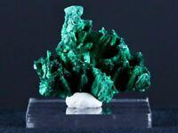 1.8 IN Bright Malachite Fibrous Velvet Crystal Specimen Congo 1.1 OZ Free Stand