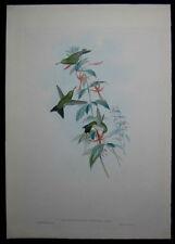 1861 Original Gould Hummingbird Osbert's Emerald Chorostilbon Osberti 352 1st Ed