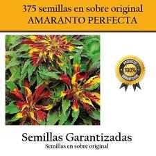 350 graines de AMARANTE PARFAIT sur original