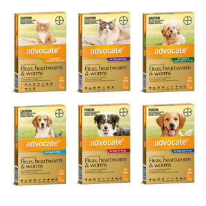 Advocate For Dogs & Cats Worm & Flea treatment Fleas, Heartworm & Worms Bayer